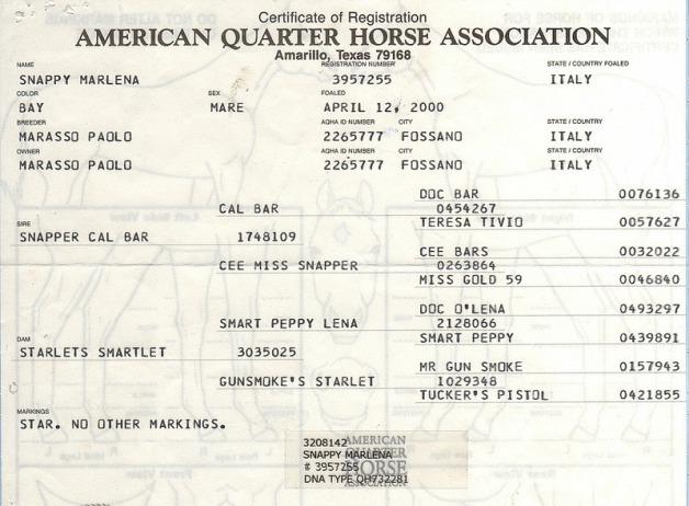 SNAPPY MARLENA (2000) AQHA 1m45 bay mare  SNAPPER CAL BAR  X  STARLETS SMARTLET  (SMART PEPPY LENA)